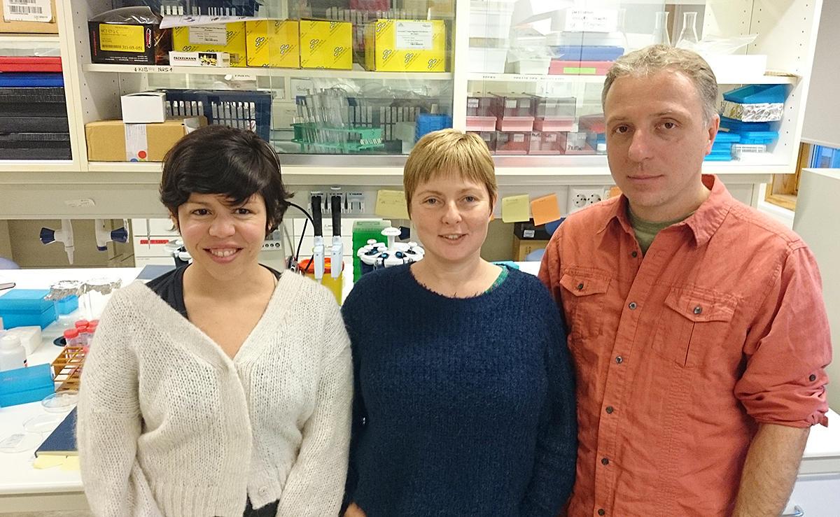 Doktorgradsstipendiat Sofia A. V. Fortunato ved Uni Research Sars-senteret (til venstre) klarte å finne ParaHox-genet i en svamp. I midten ses gruppeleder Maja Adamska og til høyre Marcin Adamski. (Foto: Andreas R. Graven, Uni Research)
