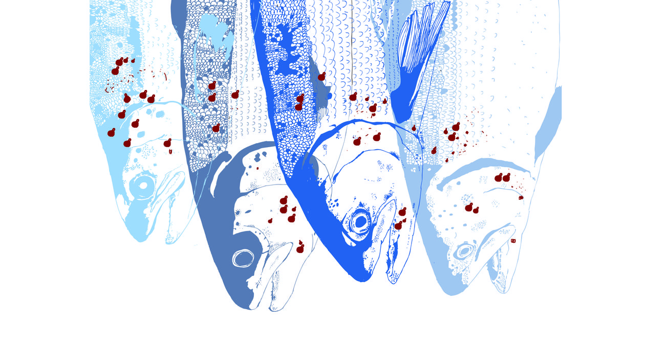 Illustration by artist Oda Valle for an article on the Sea Lice Research Centre at the University of Bergen for the UiB Magazine 2014.