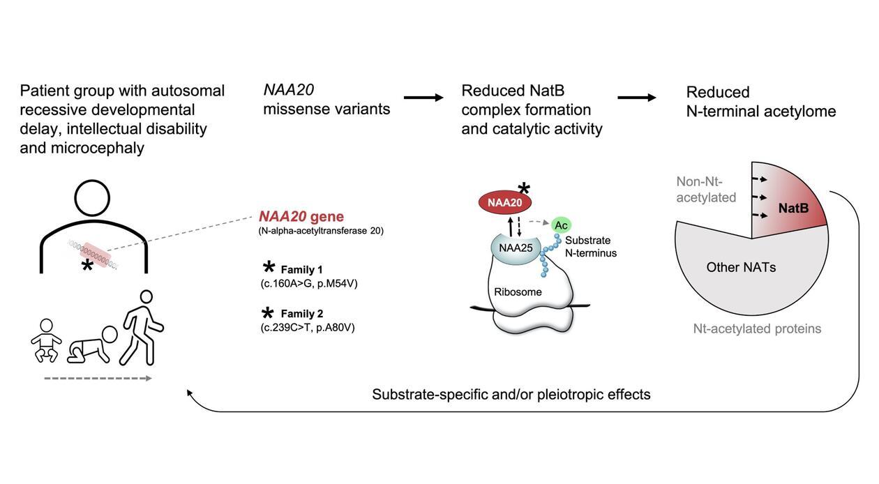 Feil ved NAA20 genet fører til at NatB komplekset av proteinene NAA20 og NAA25 ikke dannes optimalt. Derved blir NatB sin evne til å utføre acetylering av cellulære proteiner redusert og dette fører til sykdom.