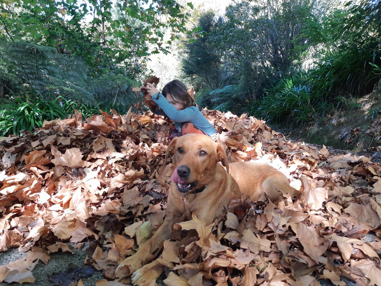 girl and dog in autumn leaves