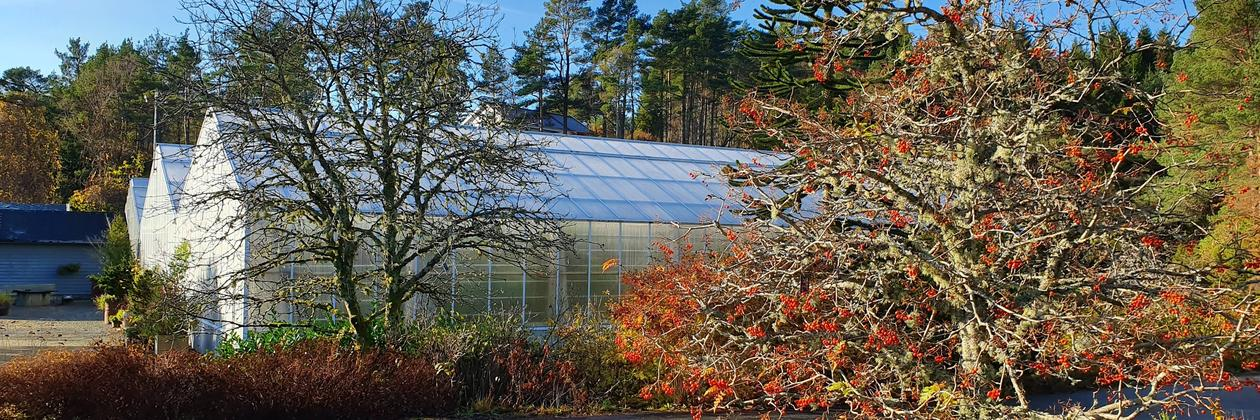 Glasshouses at the University Gardens