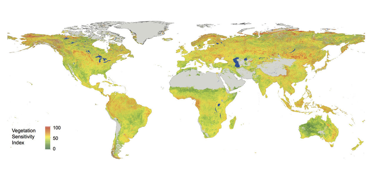 Vegetation sensitivity and climate university of bergen a world map showing the sensitivity of vegetation to climate gumiabroncs Gallery