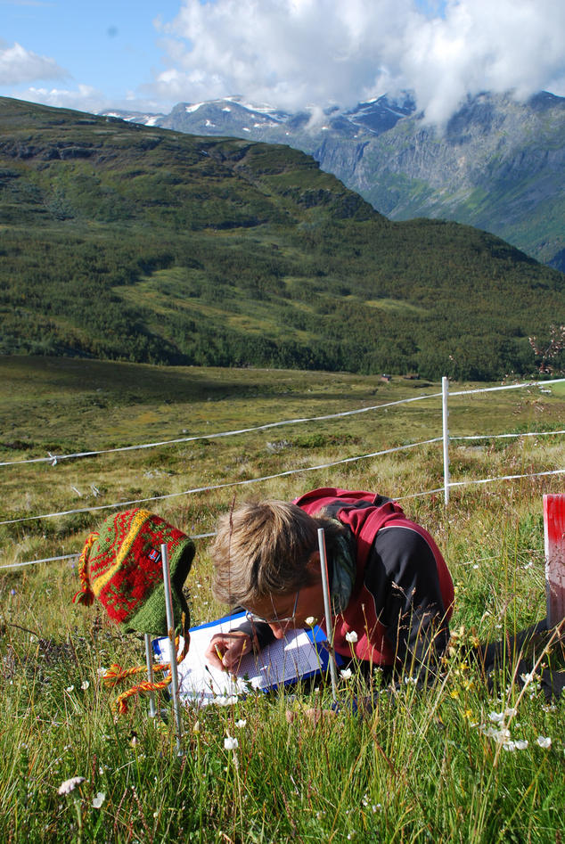 A view of Gudmedalen in western Norway with a researcher surveying a plot of vegetation