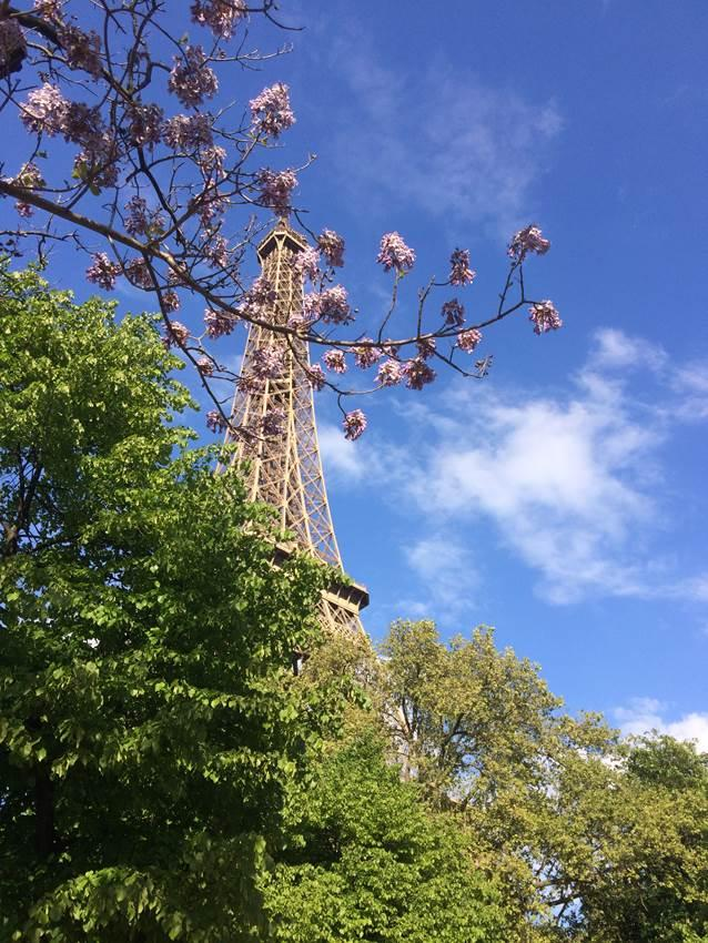 Blossoming trees and the eiffel tower.