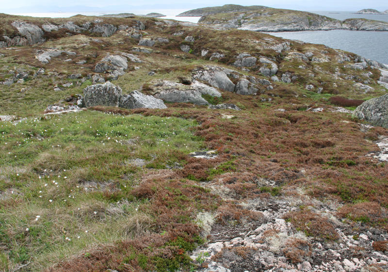 Heathland landscape with grassy area on the left and young heather and on the right heath destroyed by winter drought