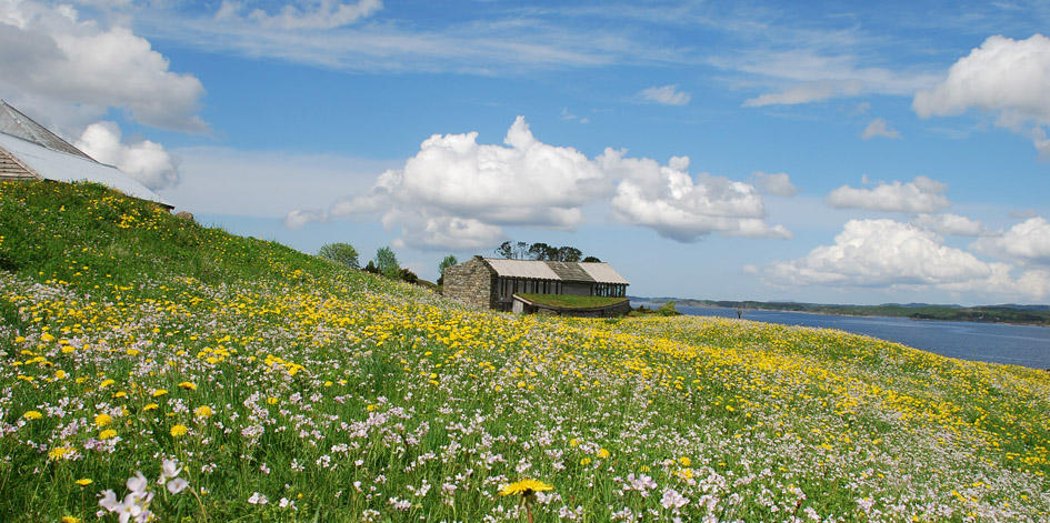 A view across a flower-rich meadow to the Heathland Centre building on the island of Lygra