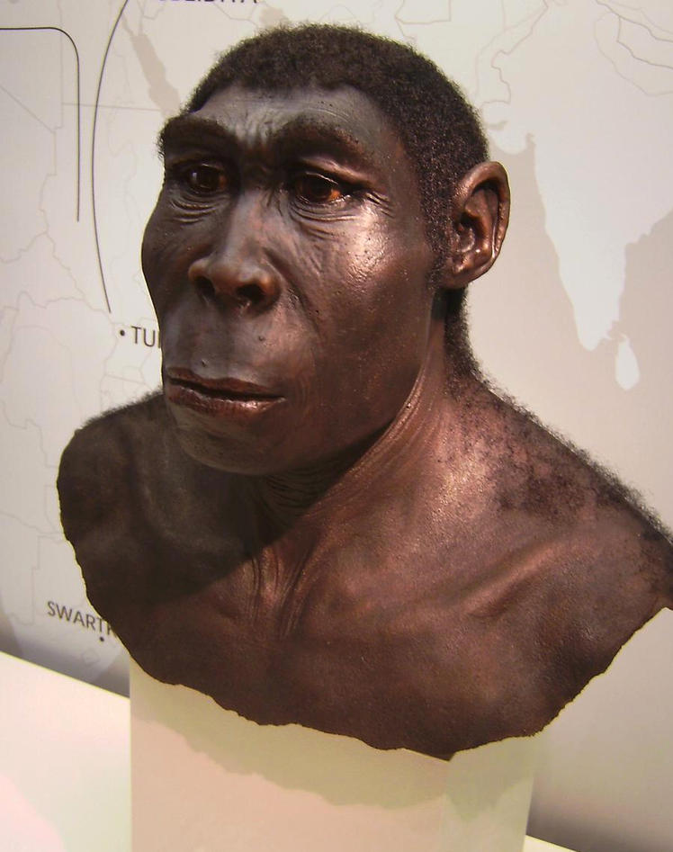 A reconstruction of the chest and head of homo erectus, used as part of article on archaeological discoveries made by Professor Francesco d'Errico at the University of Bergen.