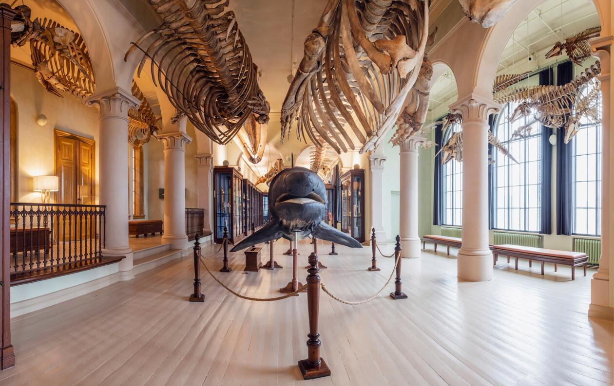 hvalsalen på universitetsmuseet