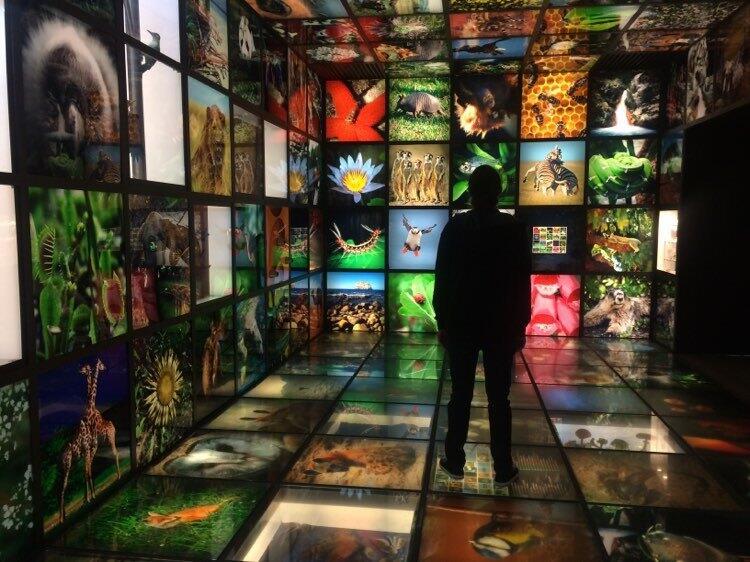 Photo of biodiversity exhibition