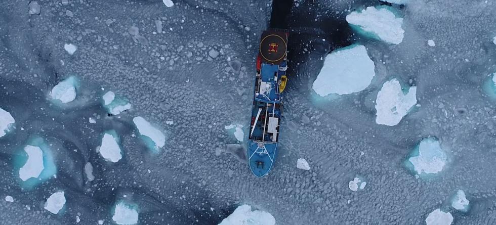 Lance innefrosset i isen i Polhavet 2015