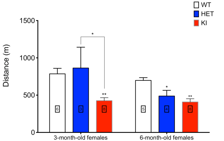 Figure: Treadmill activity in wild type and PolGA449T heterozygous and homozygous females at 3 and 6 months of age