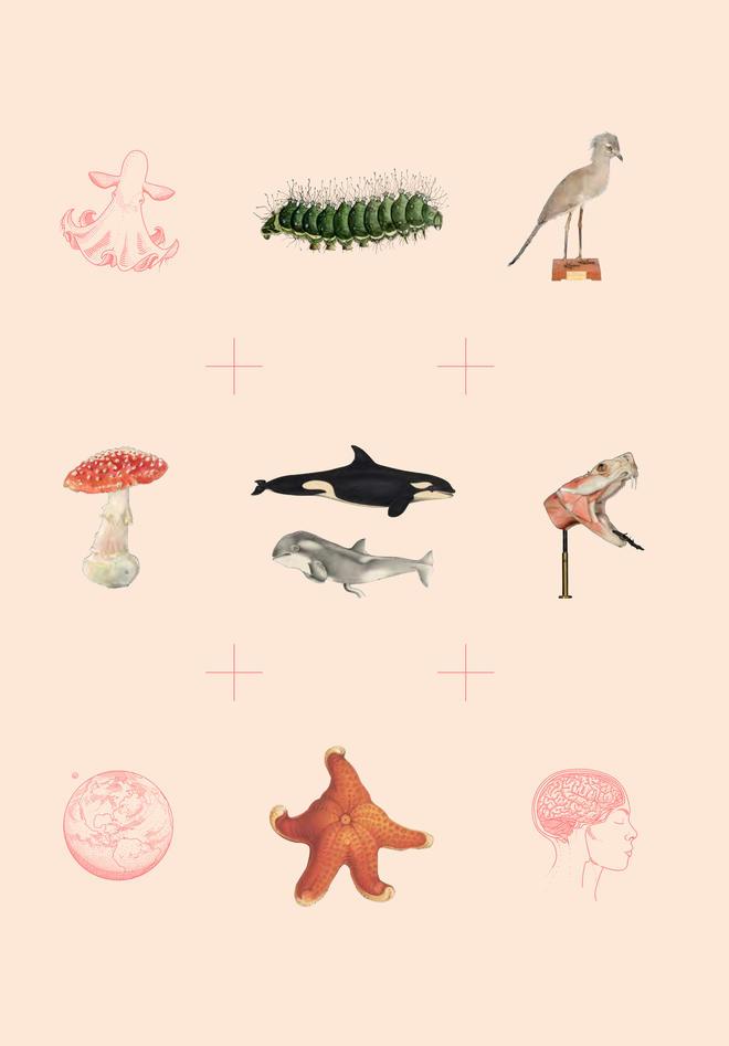 Illustrasjoner  2019 årbok