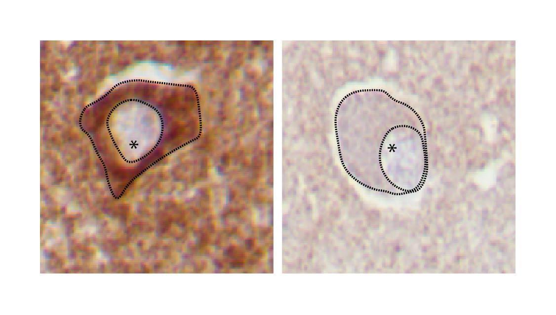 Illustrasjon mitokondrie
