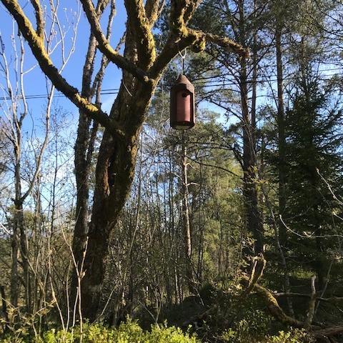 New woodpecker-proof birdboxes