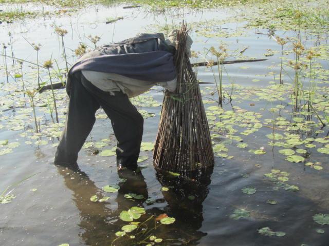 Farmer fishing