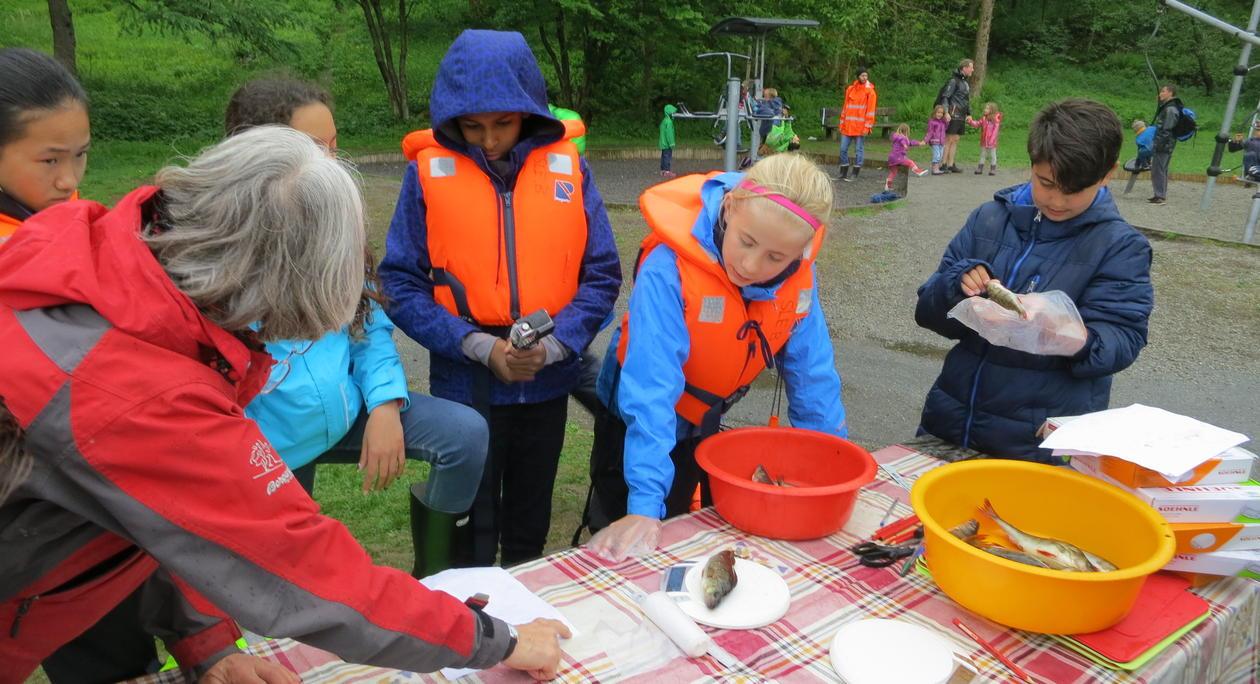 Undersøkelser av fisk
