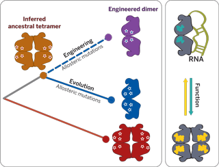 Summary image from Publication abstract