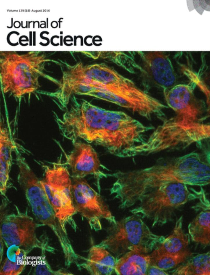 J. Cell Sci. 129(15) cover image
