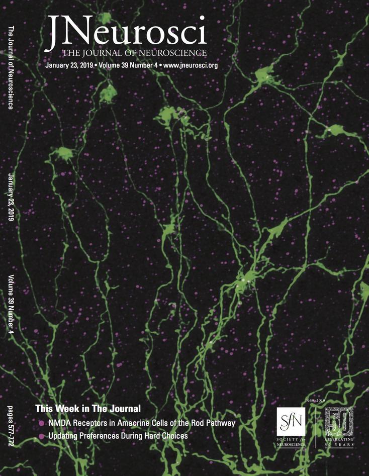 Extrasynaptic NMDA receptors in retinal amacrine cells