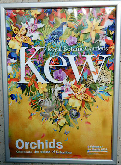 A colourful poster advertising Kew's orchid festival