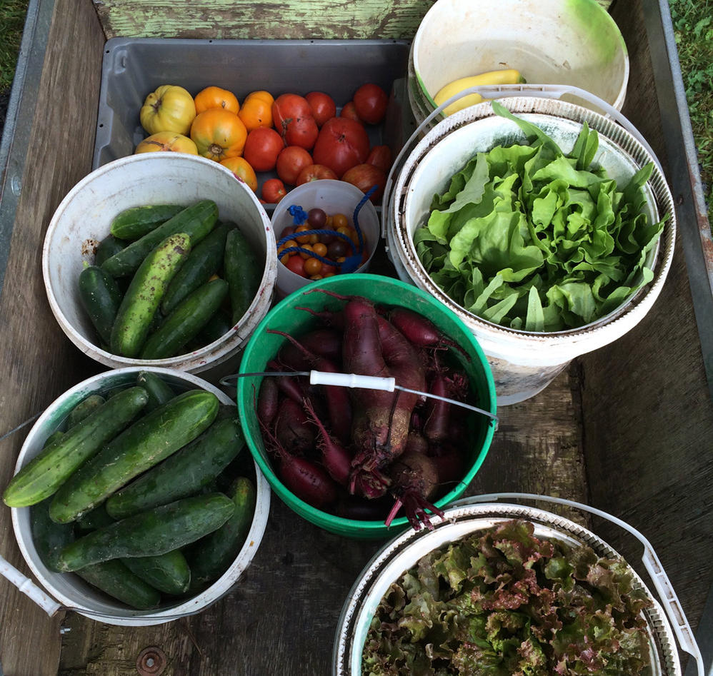 Food sharing in the US