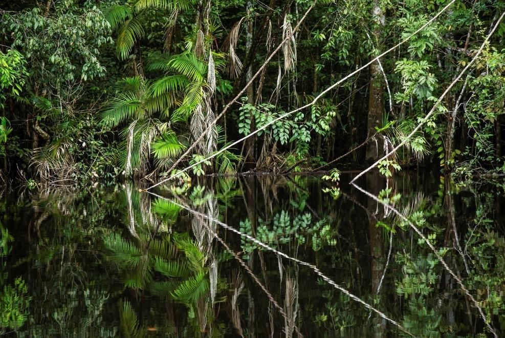 Bilde av jungel som speiler seg i stille vann