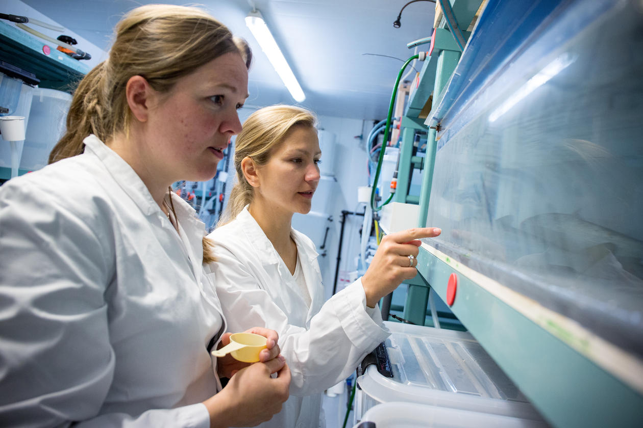 EVALUATED: Aina-Cathrine Øvergård and Anna Zofia Komisarczuk is two of the researchers at the Sea Lice Reseach Centre in Bergen. After a midway evaluation the centre gets the green light to continue their work.