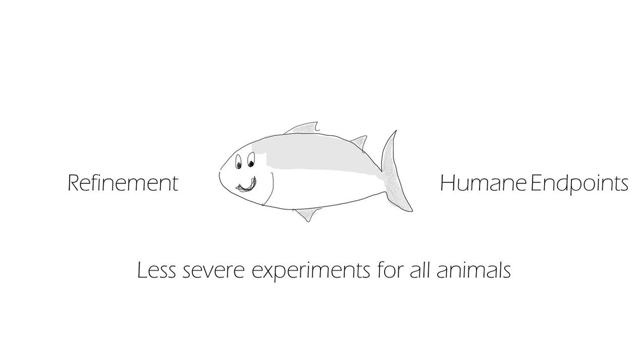 Less severe experimenst in Fish