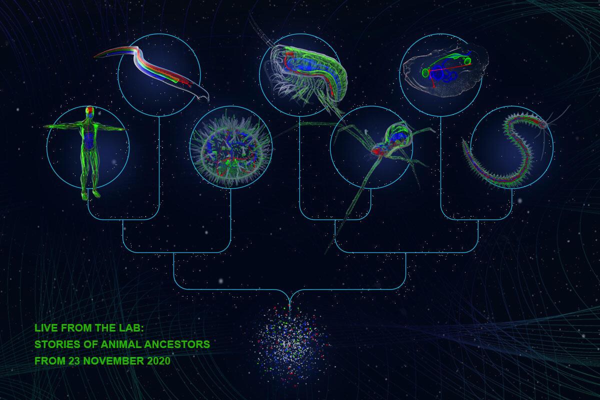 Skjematisk fremstilling av marine organismer i et fylogenetisk diagram