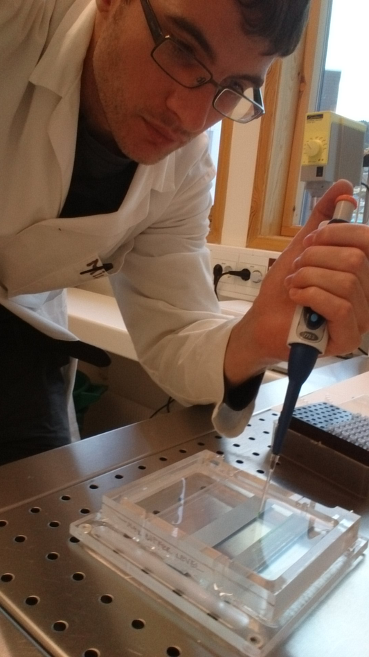 Pipeting the amplified DNA fragments onto an agarose gel