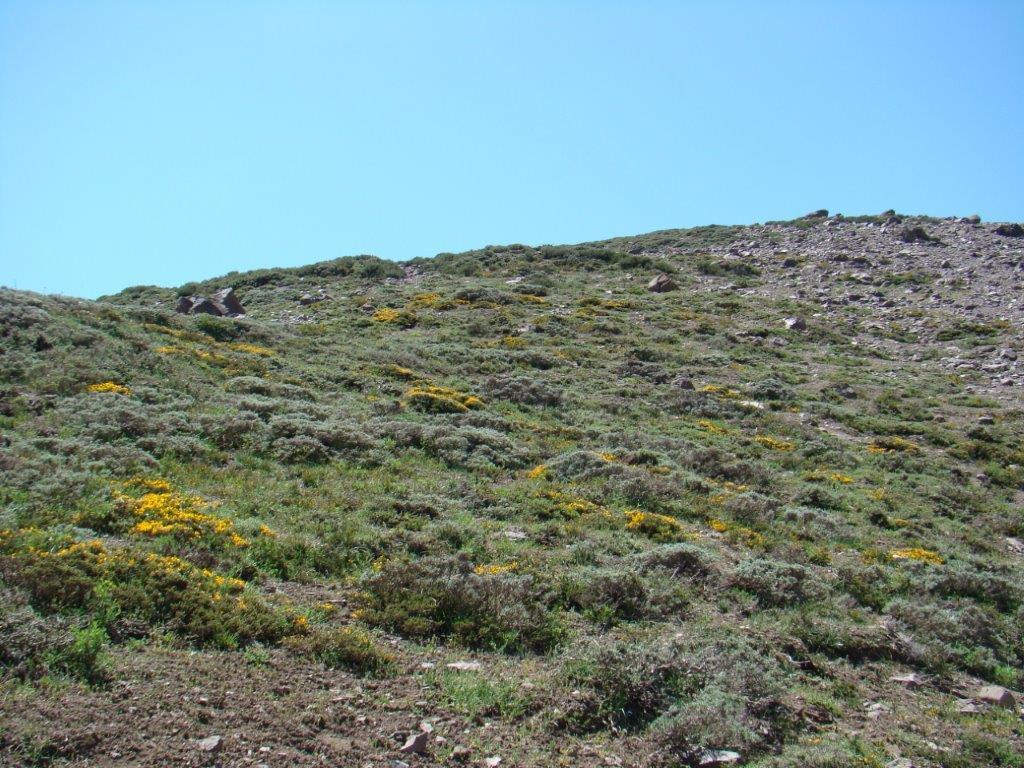 Lower alpine landscape with more continuous vegetation