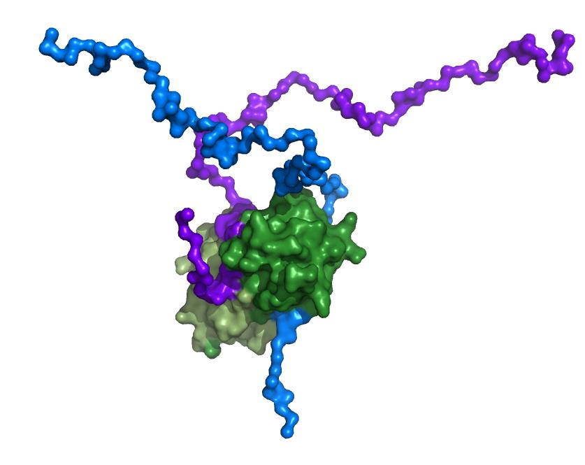 MAG-DYNLL1 complex