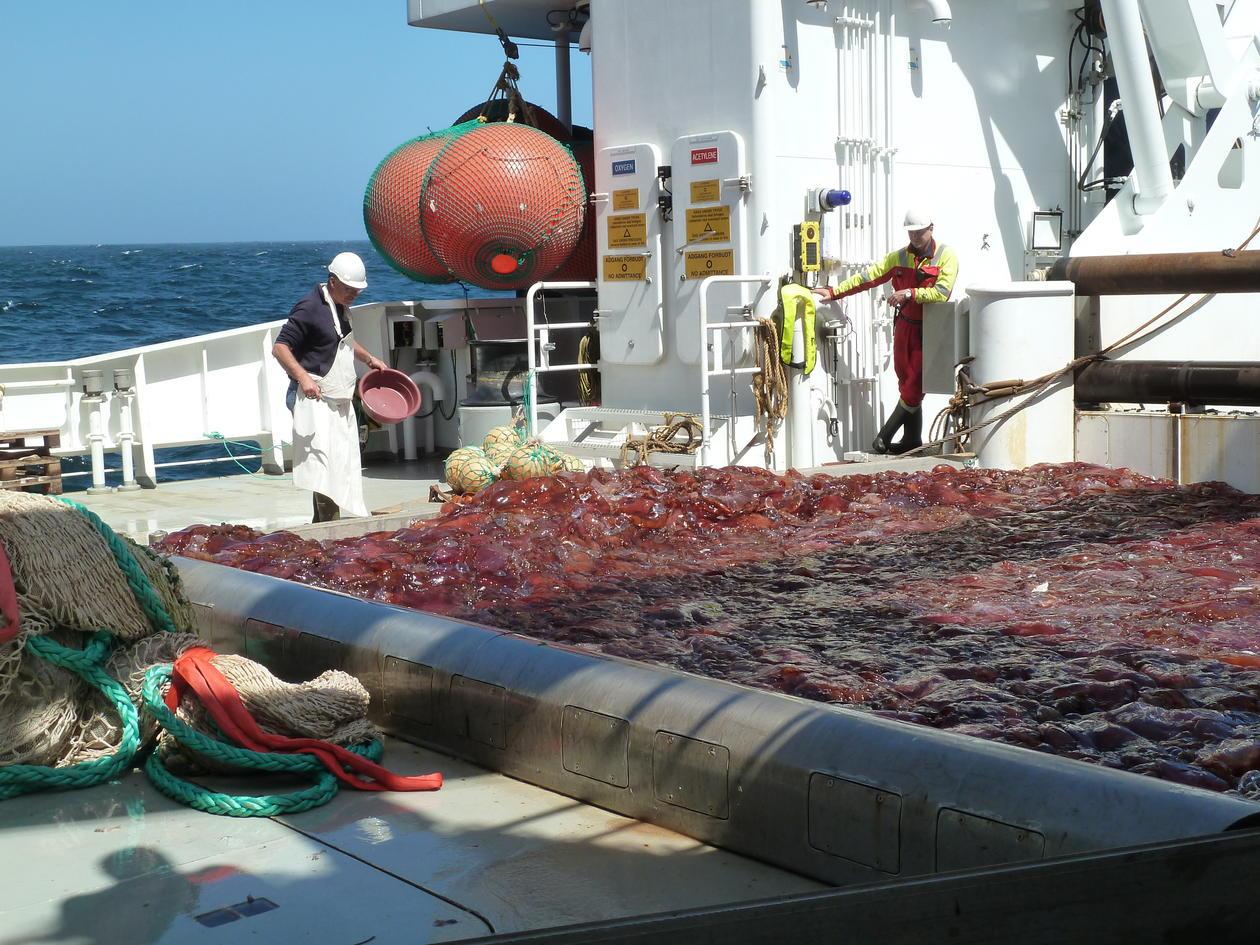 Maneter på dekk av et fartøy ute på havet