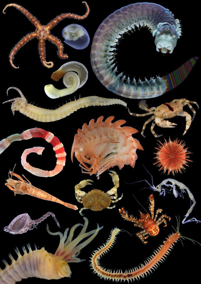 DNA lab avdekke marint artsmangfold