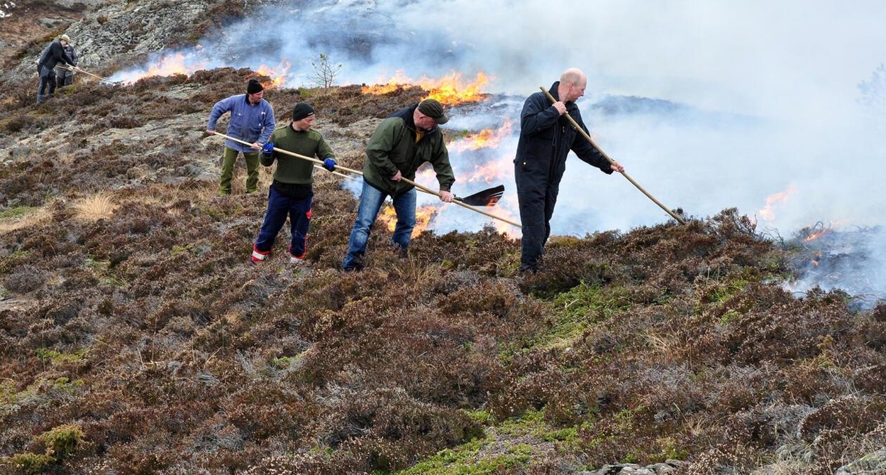 Photo: Burning heathland