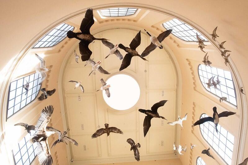 Fugler i inngangspartiet, Universitetsmuseet i Bergen
