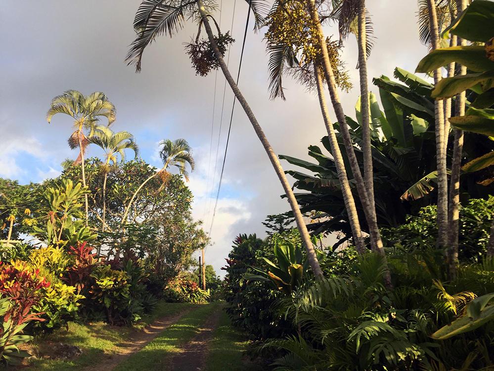 Palmer Hawaii