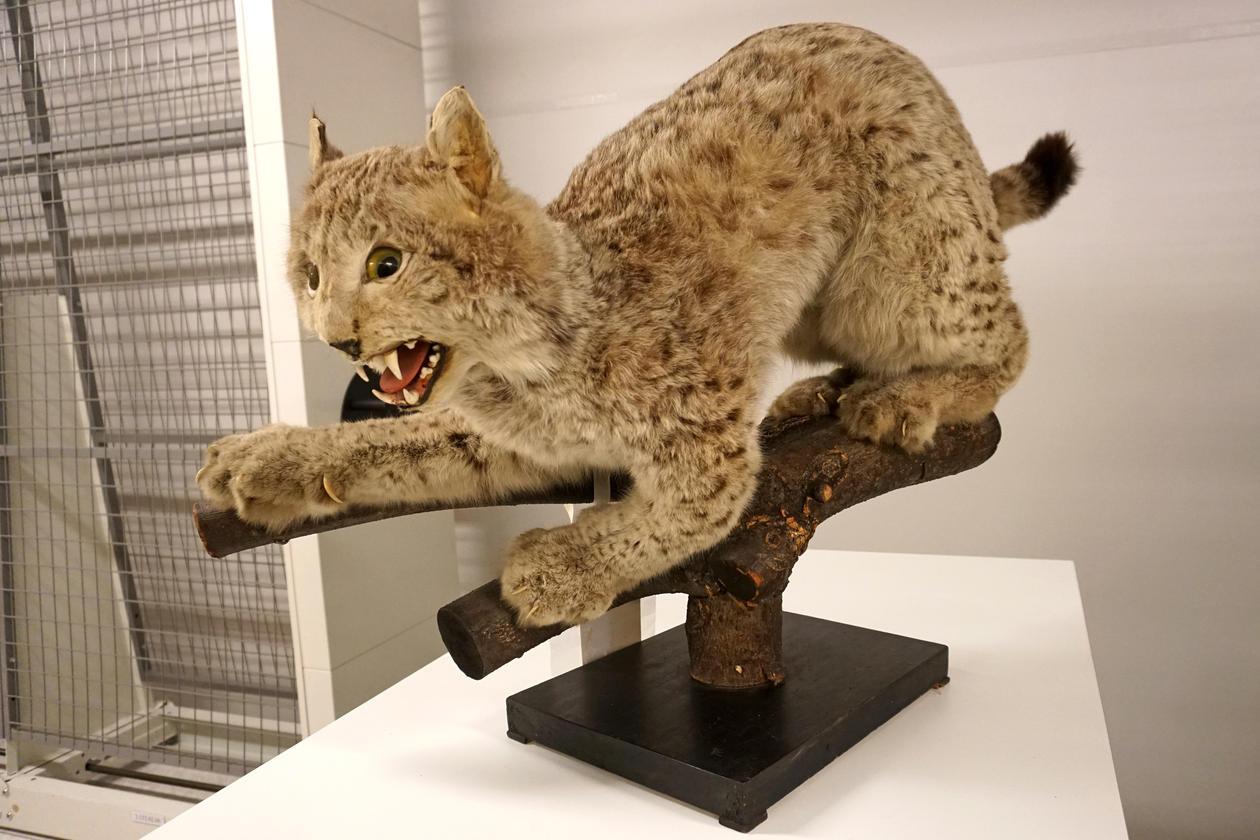 Naturhistorisk museum, det etterlatte dyrene