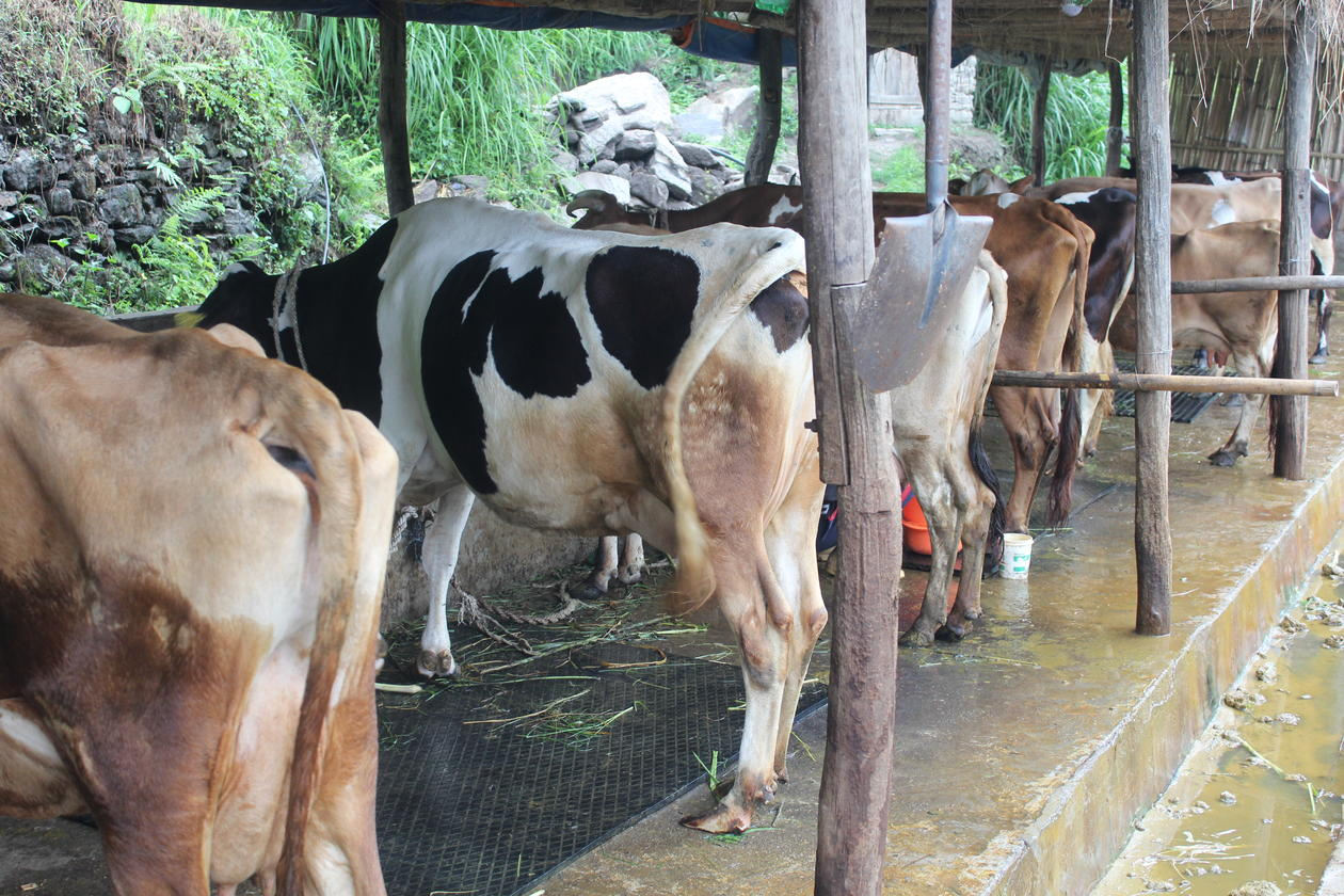 New practices in livestock.