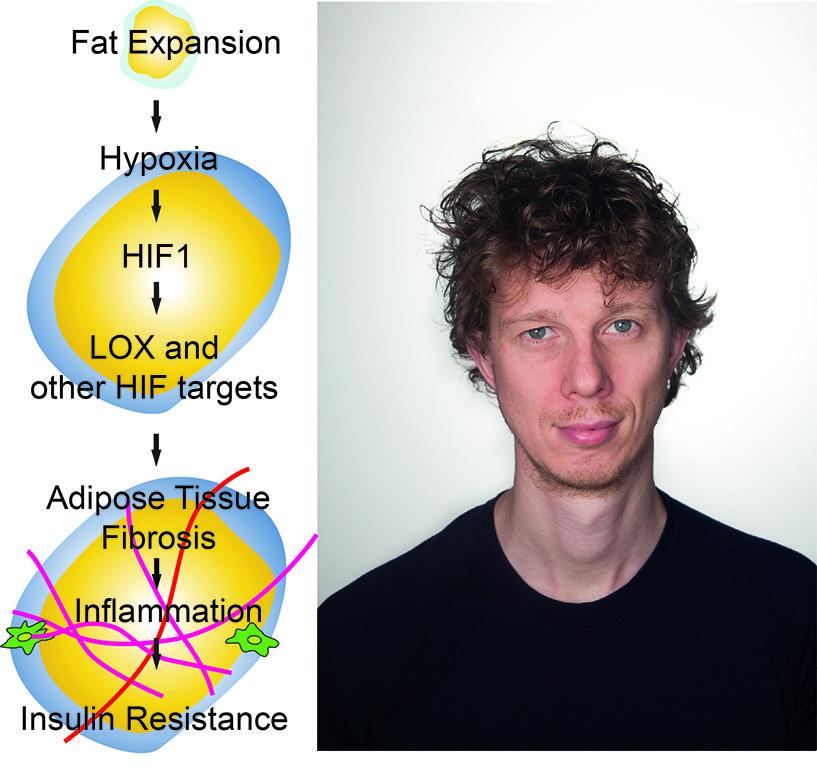 Hypoxia, insulin resistance and Nils Halberg
