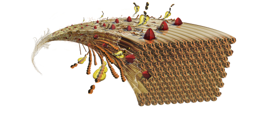 illustrasjon av biomasse