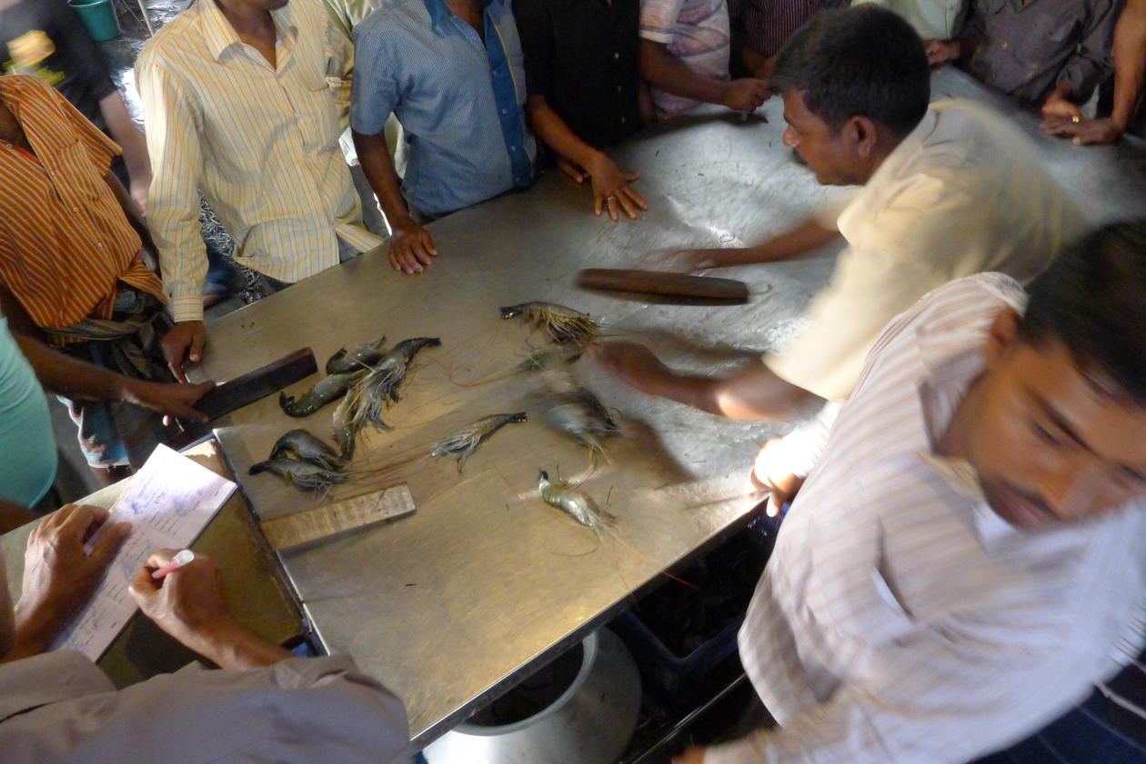 Farmed fish and seafood being traded at an auction house in the Khulna region west in Bangladesh, in March 2012.