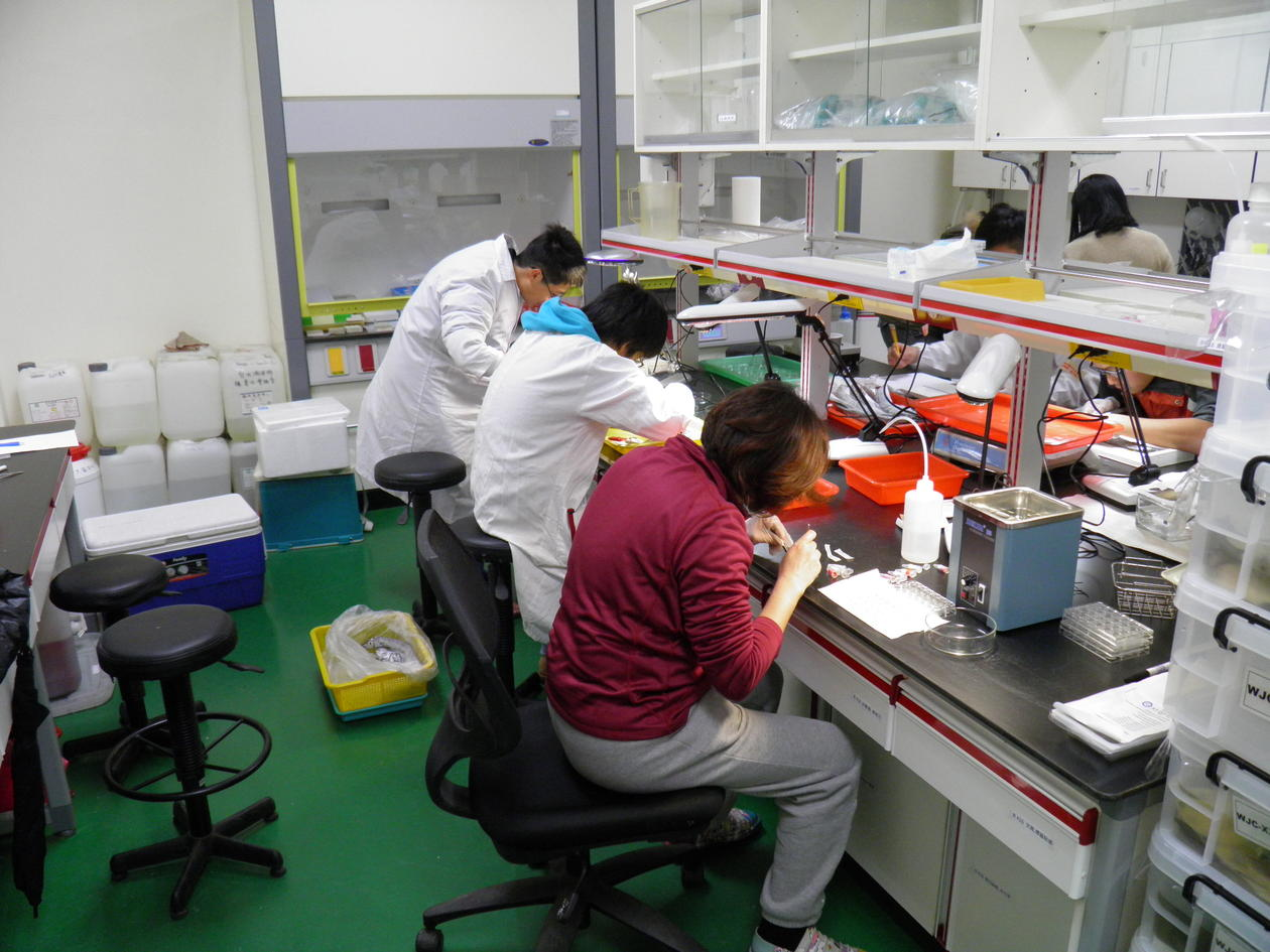 Three researchers taking samples from cutlassfish in a laboratory