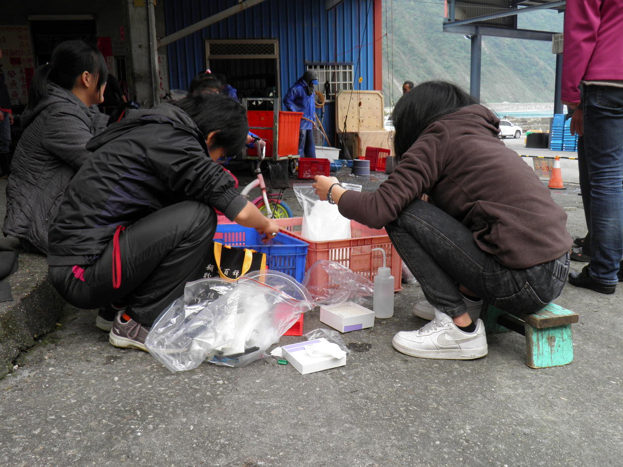 Researchers taking tissue samples from cutlassfish in Dongao harbour