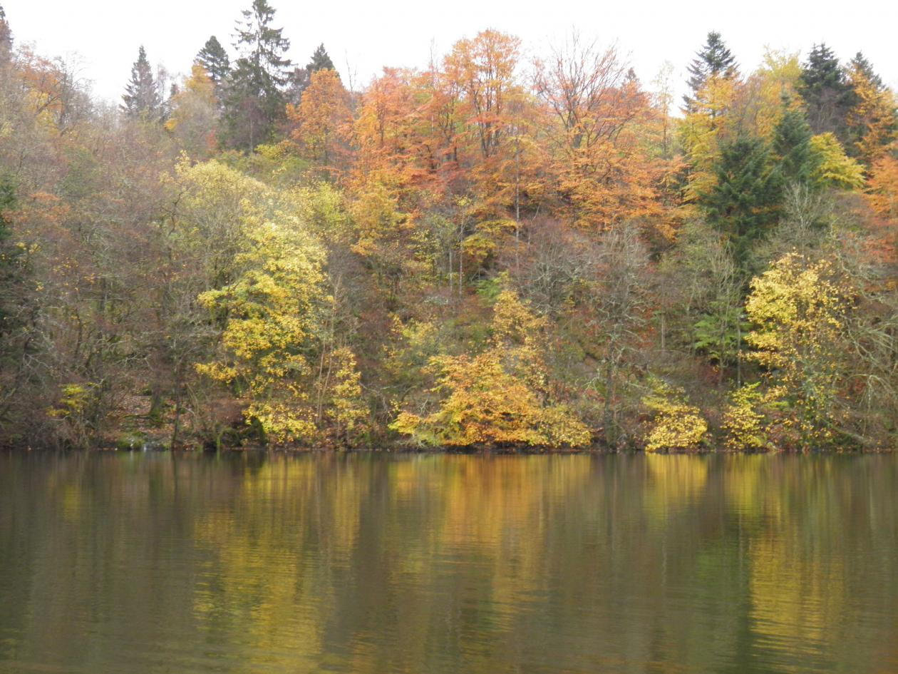 Trees with yellow leaves reflect on lake surface