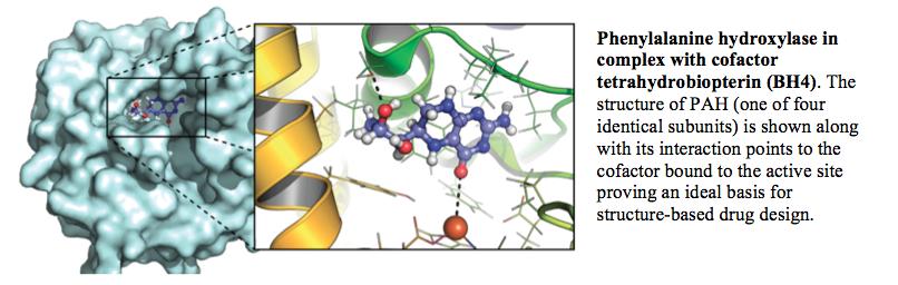 Phenylalanine Hydroxylase