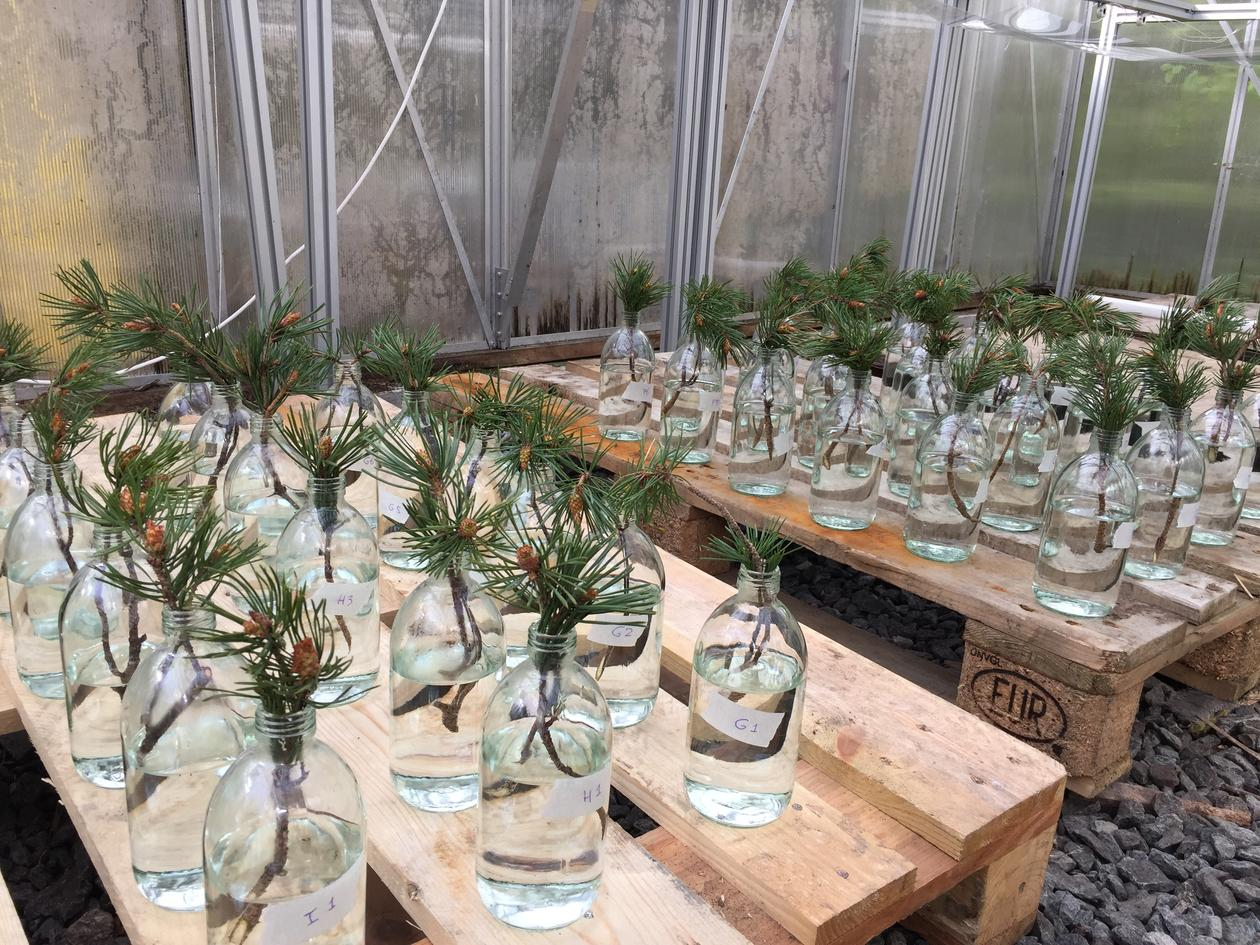 Experiment at the glasshouses