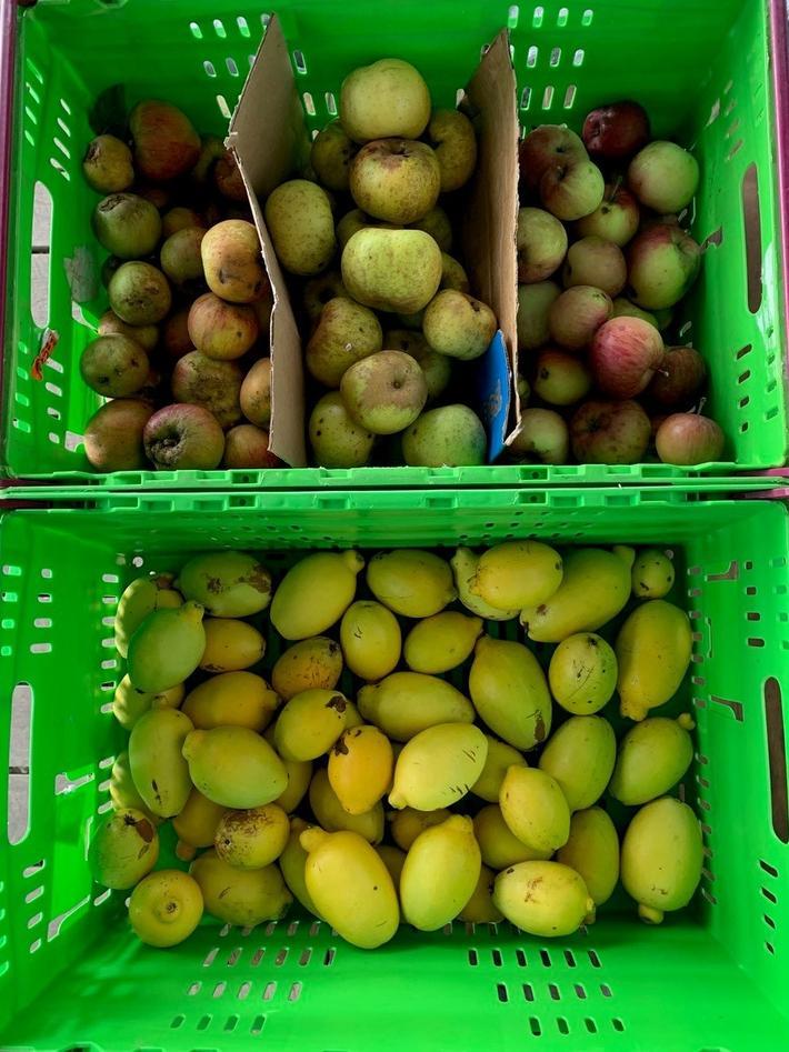 Harvest of fruit