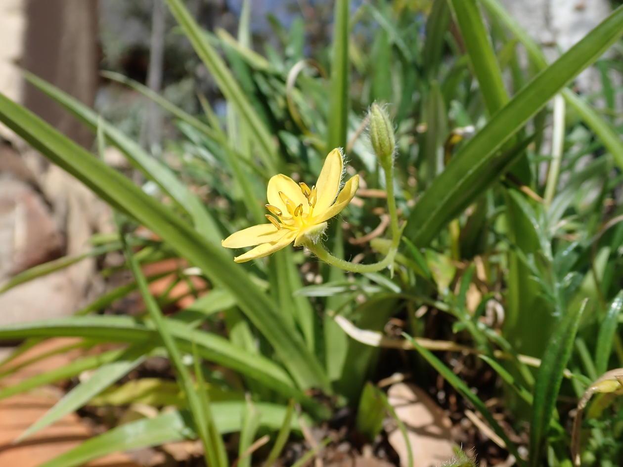 Rhizomes plant