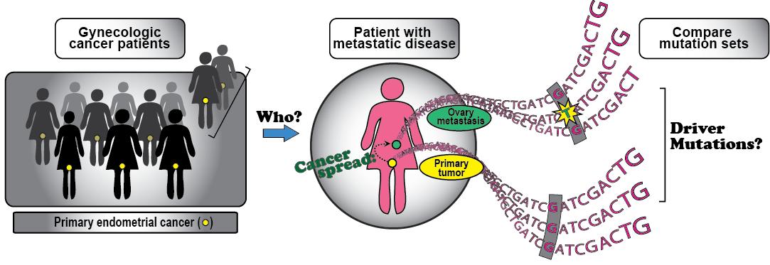 Molekylær karakterisering av metastatisk endometriecancer